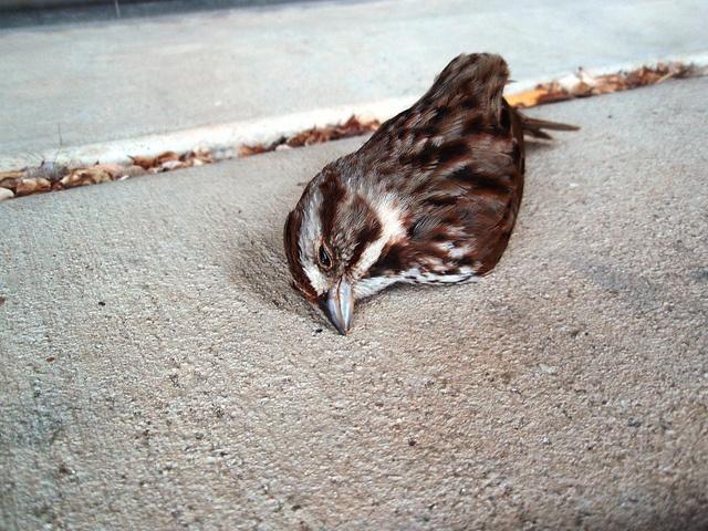 Dead Bird-Climate